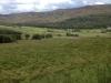 Schottland im Juli 2012: Sattes Grün