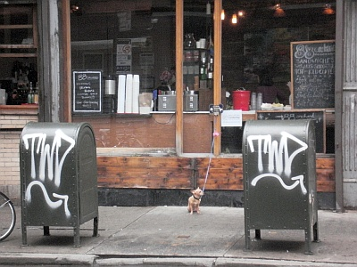 kleiner hund in nyc